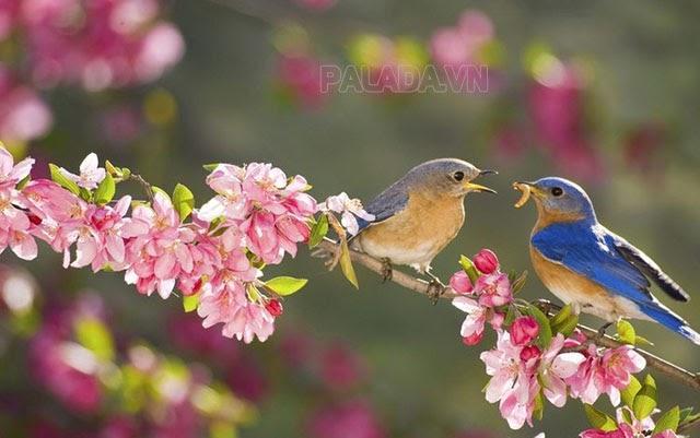 Lập xuân là thời điểm bắt đầu mùa xuân