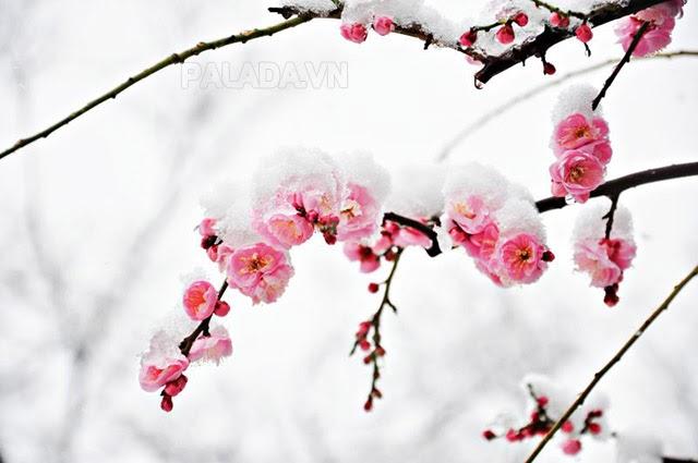 Đông chí là thời điểm lạnh nhất trong năm