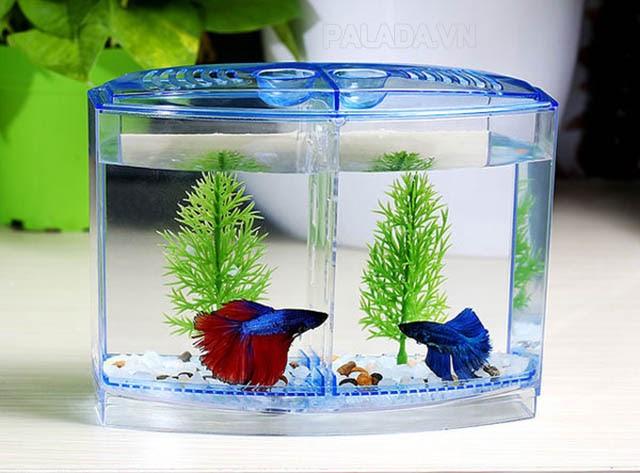 Bể cá nhỏ xinh để bàn
